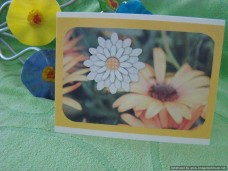 Sentiments Friendship Flowers Galore